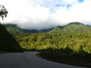 Photo taken close by the study site. The road that pass through Eastern Andes, and the magnificent Montane forest of western Amazonia behind. (Photo by M. L. Cárdenas)