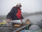 Nick recovers a sediment core for his PhD project.