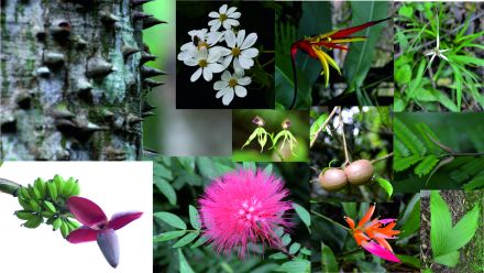A very small selection of the plants we sampled and identified during the course (Photographs by Anna Turbelin and Nick Loughlin)