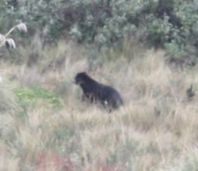 Bear-zoom