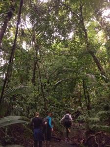 Hiking though the jungle in Panama (San Lorenzo)