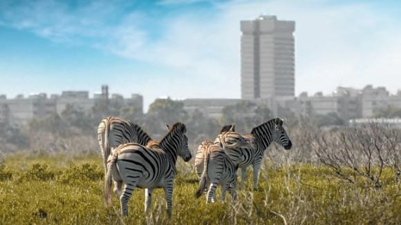 Nature Reserve, Port Elizabeth, South Africa